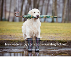 Innovative Toys to Keep your Dog Active