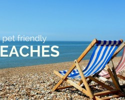 UK Pet Friendly Beaches