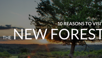 Reasons to Visit the New Forest