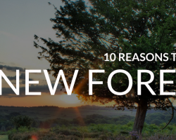 10 Reasons Why Everyone Should Visit the New Forest