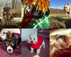 #AutumnPets competition… Winner Announced!