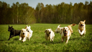 11 best dog friendly counties